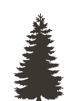 Silhouette Of An Evergreen Tree